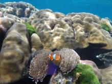 Véritable aquarium