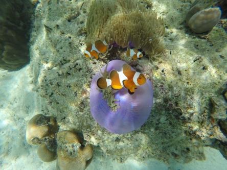 Famille de Nemo