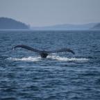 Côte ouest canadienne: côté mer